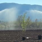 5_irrigazione