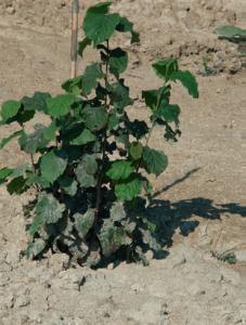 pianta-giovane