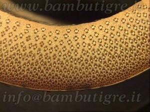 Le fibre risultano più doppie di diametro e concentrate nella parte esterna della parete del culmo.